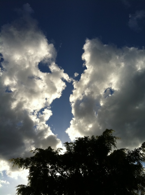 Orleigh Park Cloud Watching - West End {photo: alicia camenzuli}